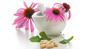 echinacea interactions